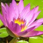 photo_violet
