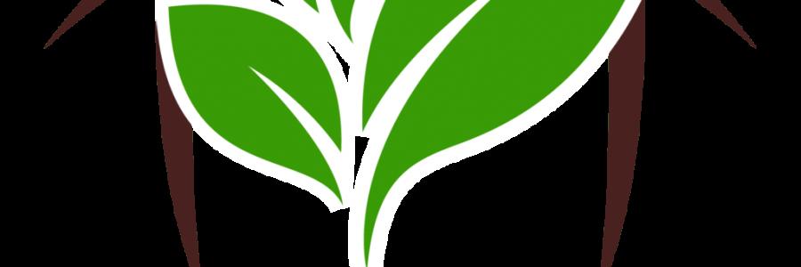 FORMATION PNL avec Lison DESTREE – à partir du 30/09/2021